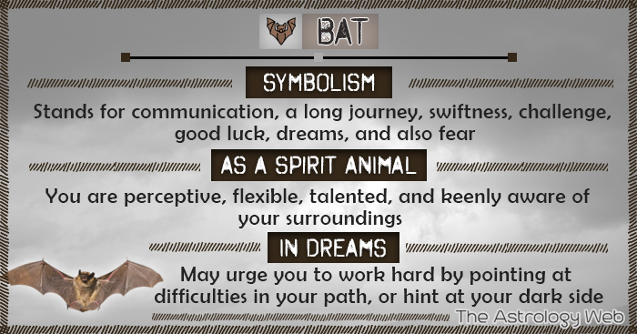 Bat Symbolism Spirit Animal Dream