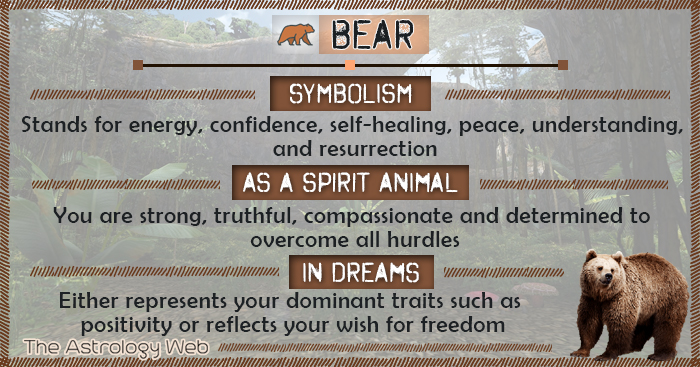 Bear Symbolism Spirit Animal Dream