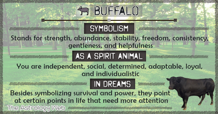 Buffalo Meaning and Symbolism | The Astrology Web