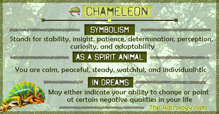 Chameleon Symbolism Spirit Animal Dream