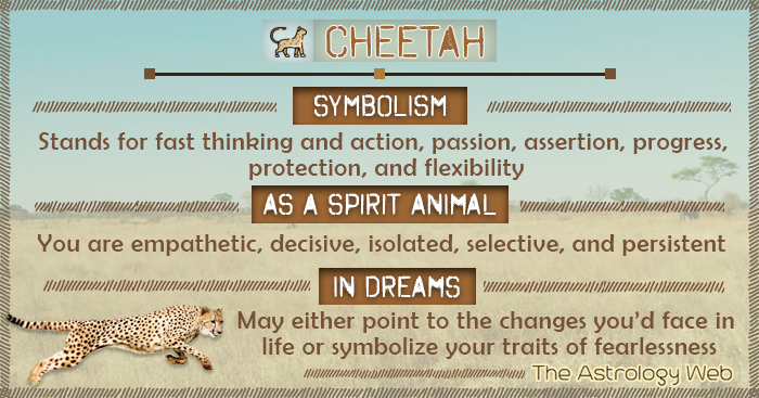 Cheetah Symbolism Spirit Animal Dream