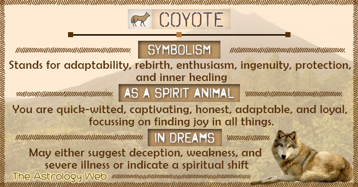 Coyote Meaning And Symbolism The Astrology Web