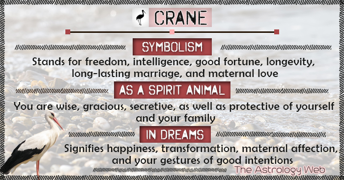 Crane Symbolism Spirit Animal Dream