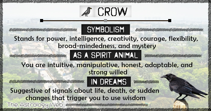 Crow Meaning And Symbolism The Astrology Web