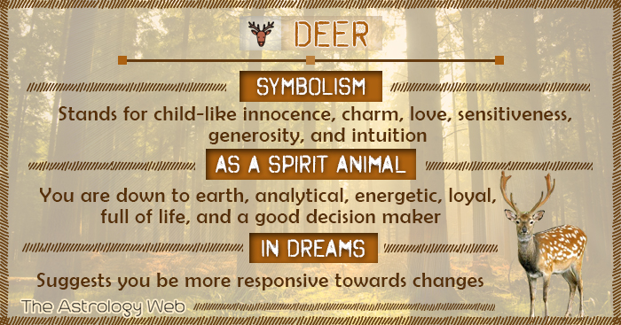 Deer Symbolism Spirit Animal Dream