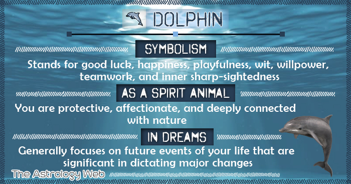 Dolphin Symbolism Spirit Animal Dream