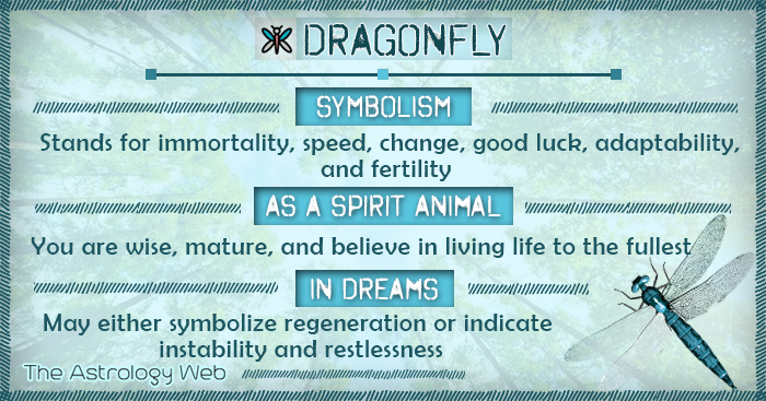 Dragonfly Meaning and Symbolism | The Astrology Web