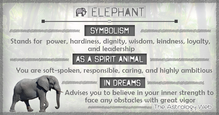 Elephant Meaning And Symbolism The Astrology Web