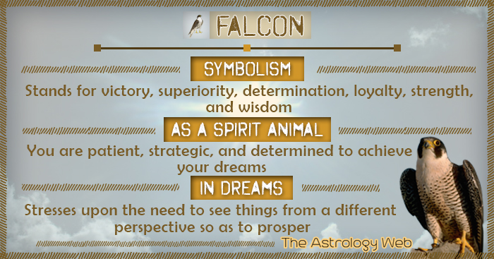 Falcon Meaning And Symbolism The Astrology Web