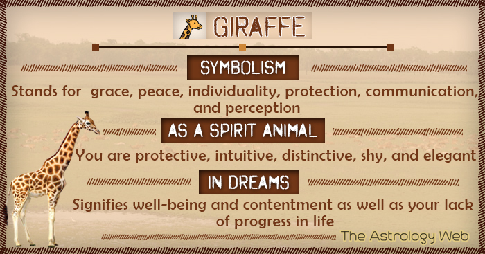 Giraffe Symbolism Spirit Animal Dream