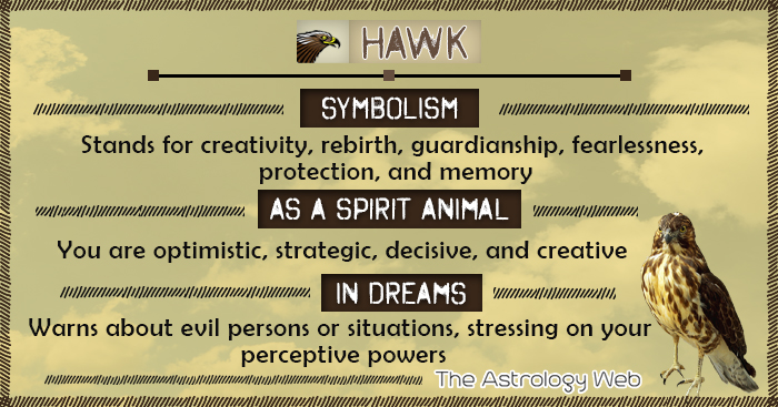 Hawk Meaning and Symbolism | The Astrology Web