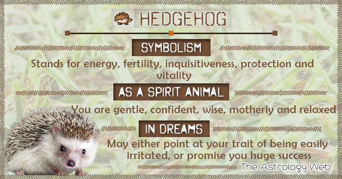 Hedgehog Symbolism Spirit Animal Dream