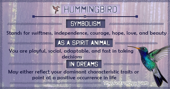 Hummingbird Meaning And Symbolism The Astrology Web The
