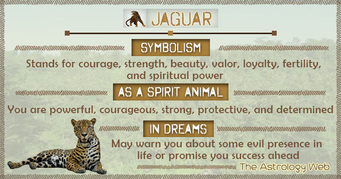 Jaguar Symbolism Spirit Animal Dream