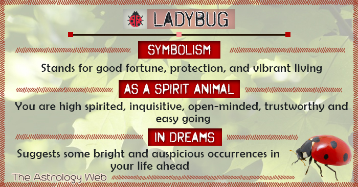 Ladybug Meaning And Symbolism The Astrology Web The Astrology Web