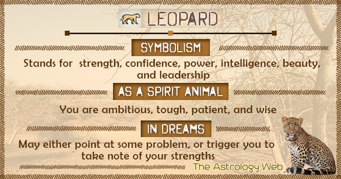 Leopard Symbolism Spirit Animal Dream