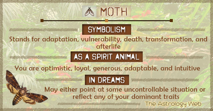 Moth Symbolism Spirit Animal Dream