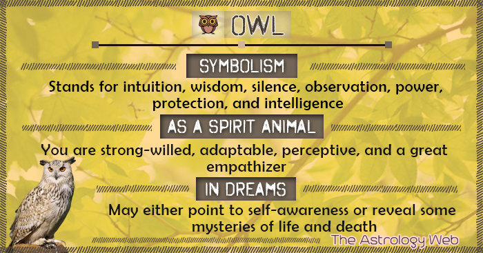 Owl Symbolism Spirit Animal Dream