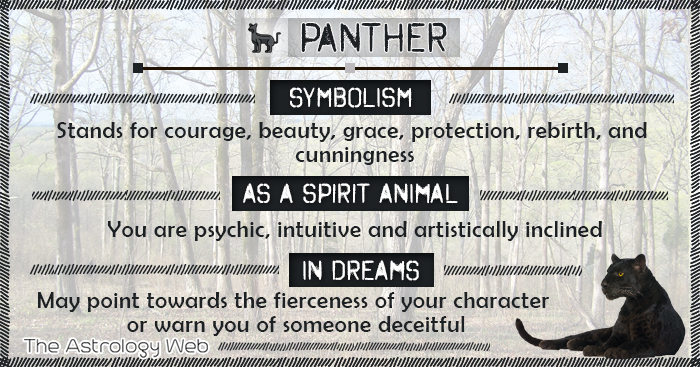 Panther Symbolism Spirit Animal Dream