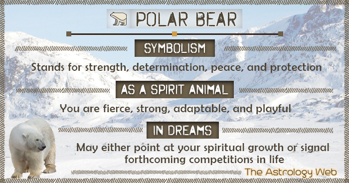 Polar Bear Symbolism Spirit Animal Dream
