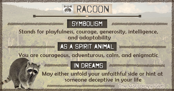 Racoon Symbolism Spirit Animal Dream