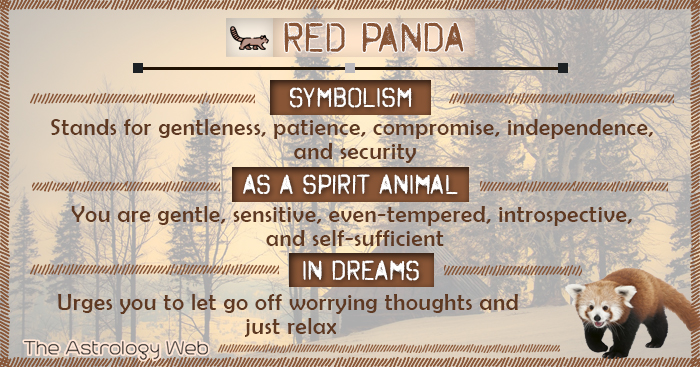Red Panda Symbolism Spirit Animal Dream