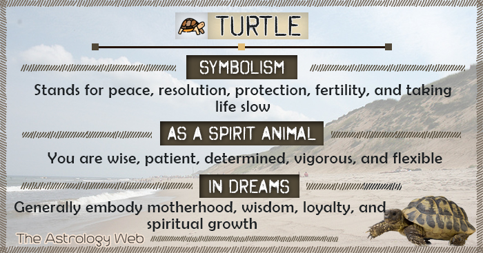Turtle Symbolism Spirit Animal Dream