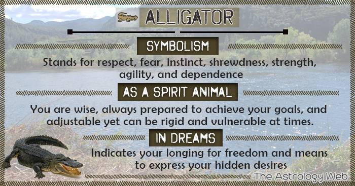 Alligator Symbolism Spirit Animal Dream