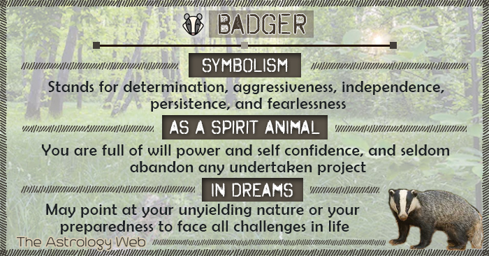Badger Symbolism Spirit Animal Dream