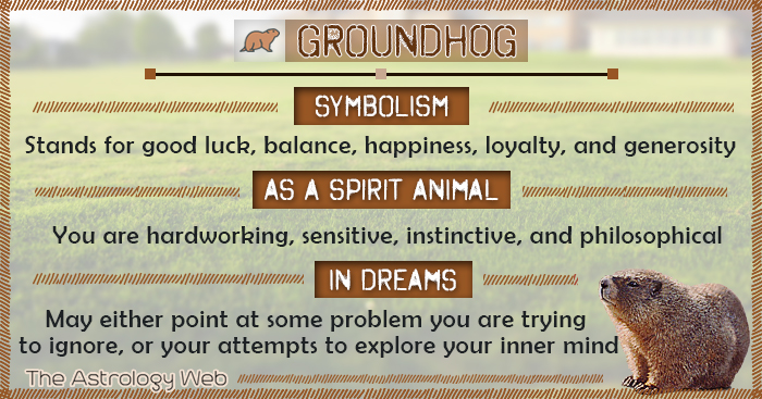 Grounghog Symbolism Spirit Animal Dream