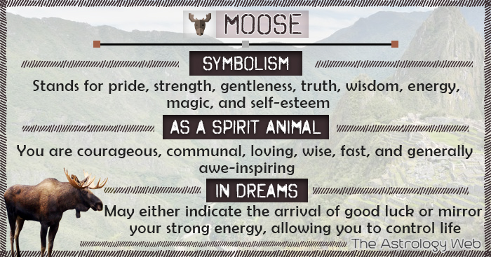 Moose Symbolism Spirit Animal Dream