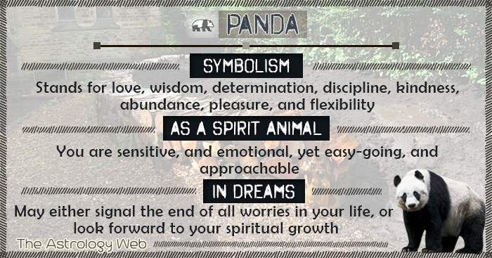 Panda Symbolism Spirit Animal Dream