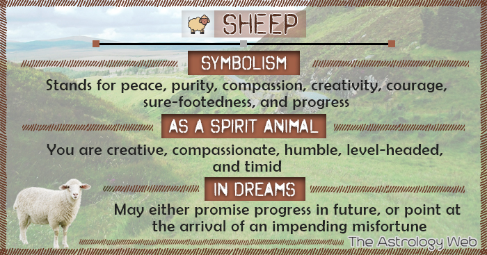 Sheep Symbolism Spirit Animal Dream