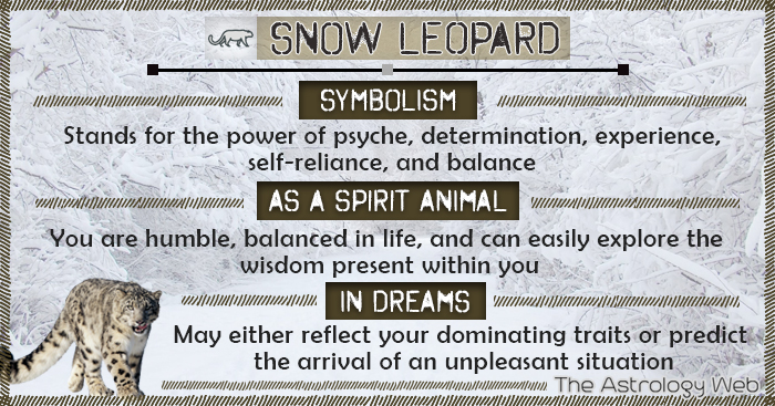 Snow Leopard Meaning And Symbolism The Astrology Web