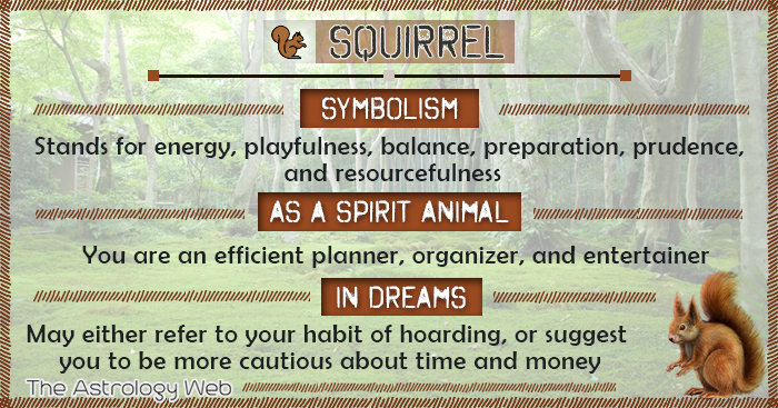 Squirrel Symbolism Spirit Animal Dream