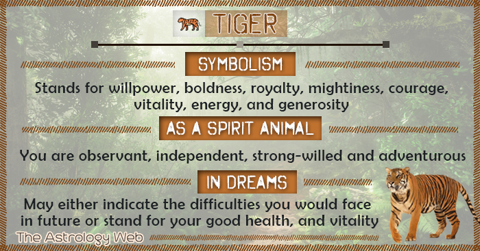 Tiger Symbolism Spirit Animal Dream