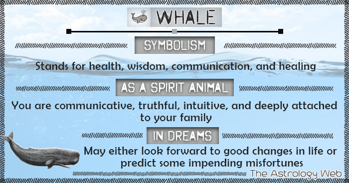 Whale Symbolism Spirit Animal Dream