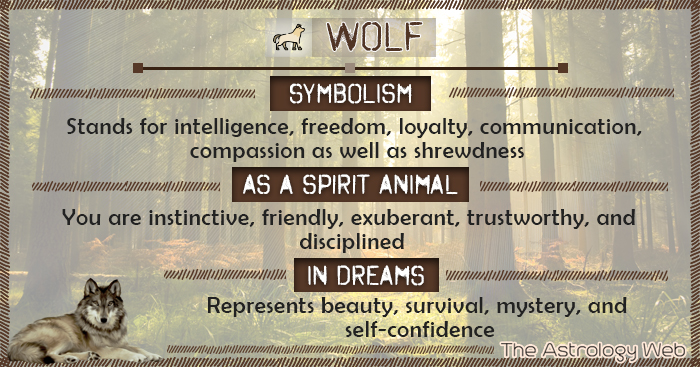 Wolf Symbolism Spirit Animal Dream