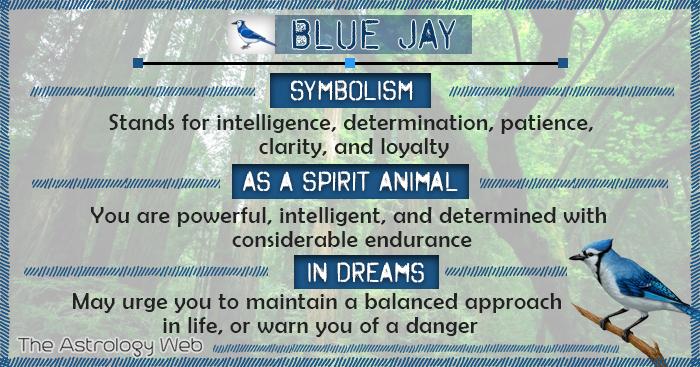 Blue Jay Symbolism Spirit Animal Dream