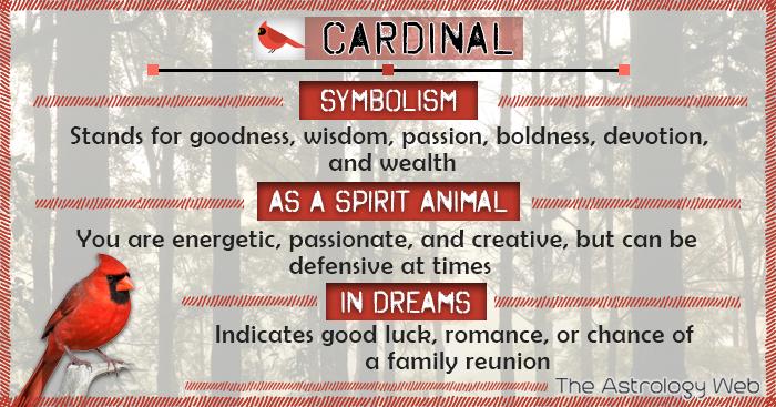 Cardinal Symbolism Spirit Animal Dream