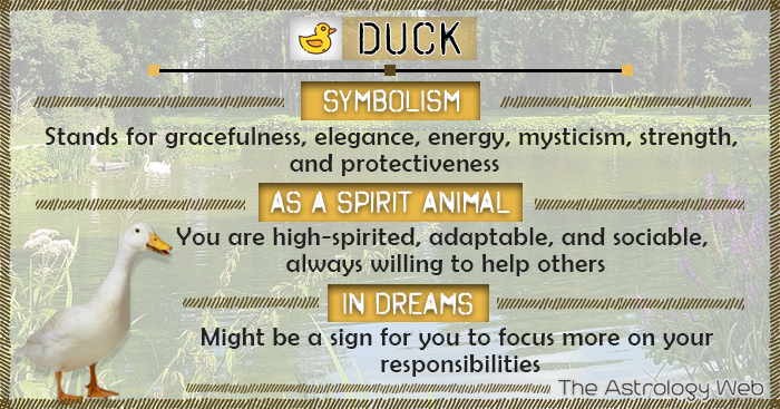 Duck Symbolism Spirit Animal Dream