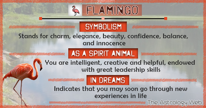 Flamingo Symbolism Spirit Animal Dream