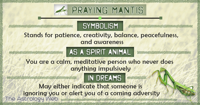 Praying Mantis Symbolism Spirit Animal Dream