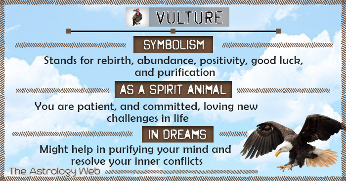 Vulture Symbolism Spirit Animal Dream